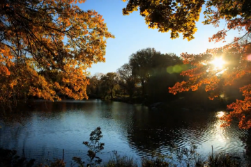Fall on Vimeo