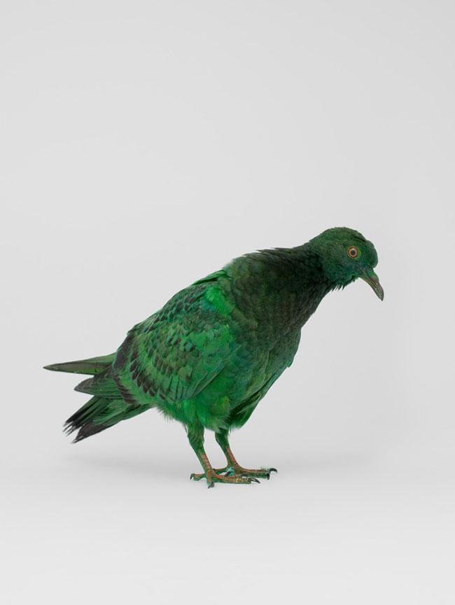 Pigeon Equality