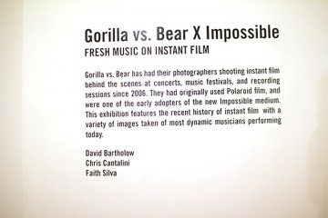 quiet-lunch-magazine-gorilla-vs-bear-x-photo-series-info