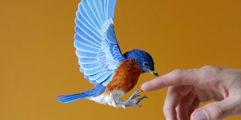 Quiet_Lunch_Magazine_Diana_Beltrane_Herrera_birds-6