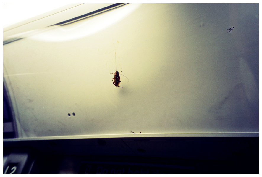 Roaches on Display, MTA.